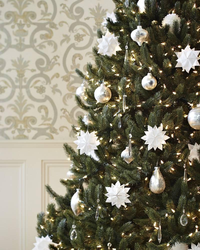 Vermont White Spruce Tree 16