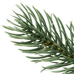 BH Blue Spruce Flip Tree by Balsam Hill