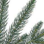 Poconos Pine Mini Tree by Balsam Hill Detail