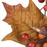 Turning Leaves PDP Foliage
