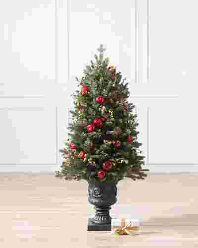 Norway Spruce Holiday Potted - child-1