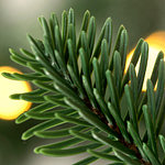 Mountain Fir Christmas Foliage by Balsam Hill