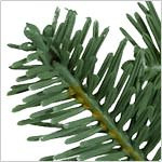 BH Balsam Fir Tree by Balsam Hill Foliage