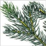 Norway Spruce Wreath by Balsam Hill Foliage
