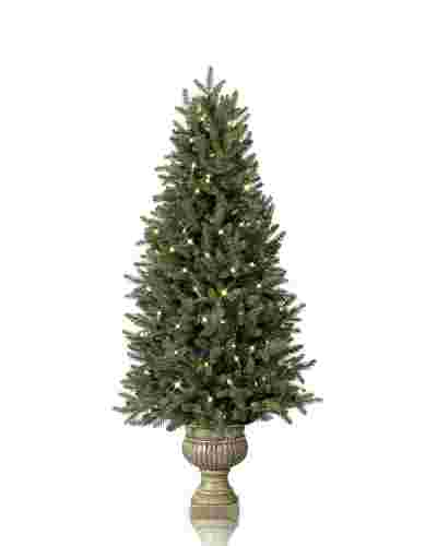Colorado Mountain Spruce  Potted-2
