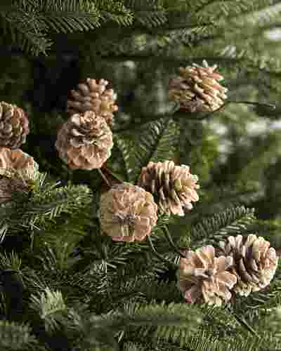 Winter Pinecone Picks, Set of 12 by Balsam Hill SSC 10