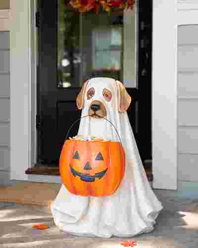 Outdoor Life Size Ghost Dog Candy Bowl by Balsam Hill