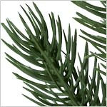Vermont White Spruce Tree by Balsam Hill Foliage