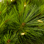 Monterey Pine Foliage PDP Foliage