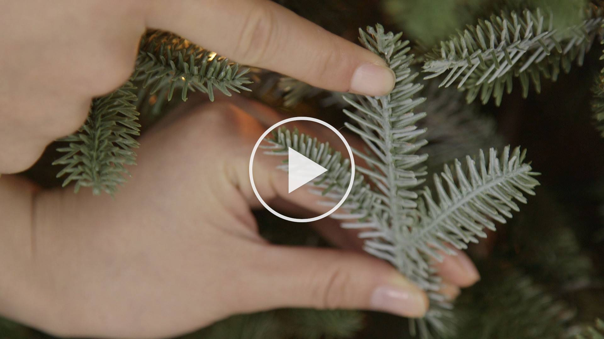 Fraser Fir Artificial Narrow Christmas Tree Balsam Hill Star 650 Wiring Diagram On Lights Repair
