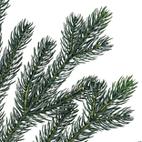 Norway Spruce Holiday Potted Tree by Balsam Hill Detail