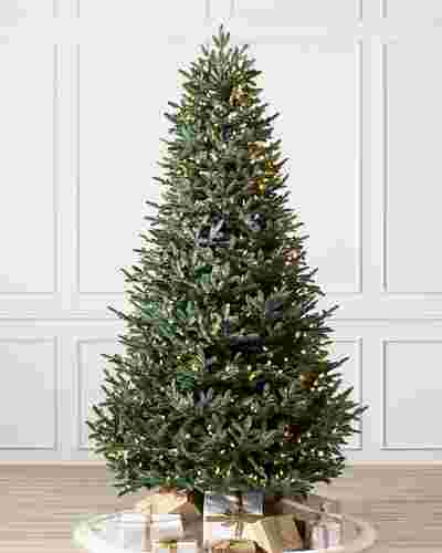 European Silver Fir Main