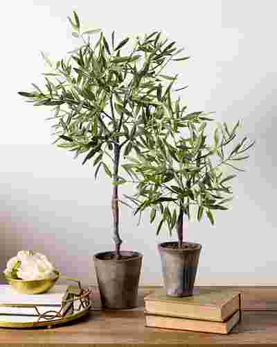 Campania Olive Topiary by Balsam Hill