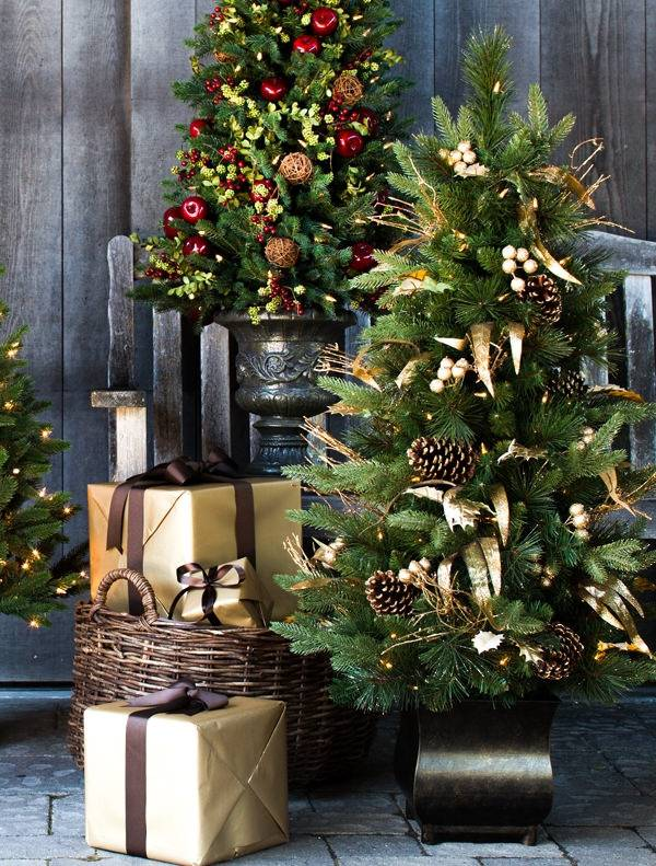 ... Coloma Golden Pine Potted Tree-4