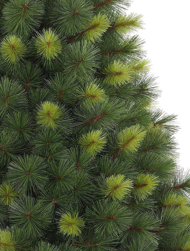 Scotch Pine Tree 5