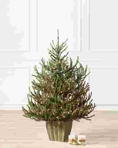 Potted Baby Spruce Tree by Balsam Hill SSC 10