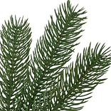 Woodland Spruce by Balsam Hill Detail