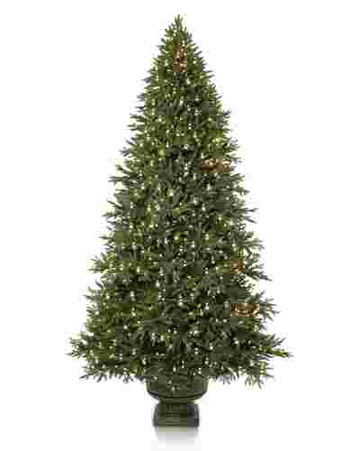 Colorado Mountain Spruce  Potted-1