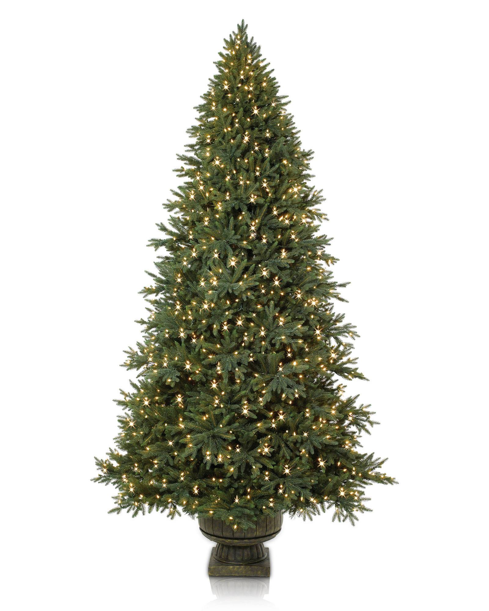 Potted Colorado Mountain Spruce | Balsam Hill