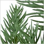 Red Spruce Slim Tree PDP Foliage