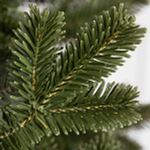 BH Fraser Fir Narrow by Balsam Hill