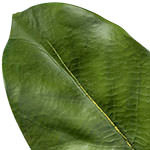 Magnolia Leaf Foliage by Balsam Hill Foliage