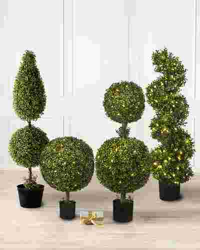 Battery-Operated Boxwood Double -1