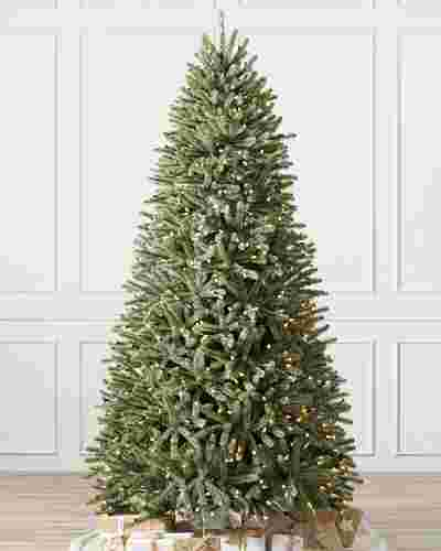 Royal Blue Spruce Main