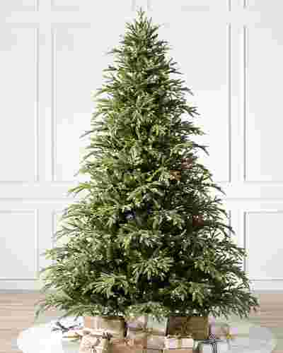 Brewer Spruce Tree-1
