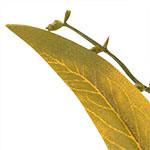 Autumn Abundance PDP Foliage