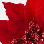 Holiday Poinsettia by Balsam Hill Foliage