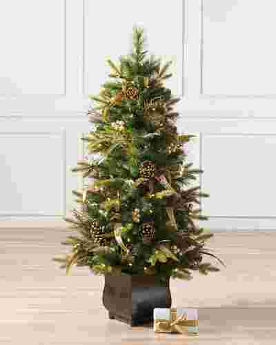 Coloma Golden Pine Potted Tree-Main