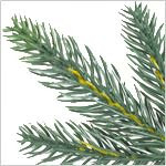 Poconos Pine Mini Tree by Balsam Hill Foliage