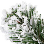 Outdoor Frosted Evergreen by Balsam Hill Foliage