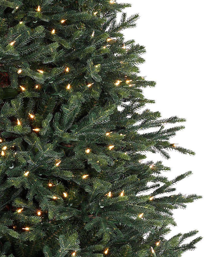 Norway Spruce Tree 2 Norway Spruce