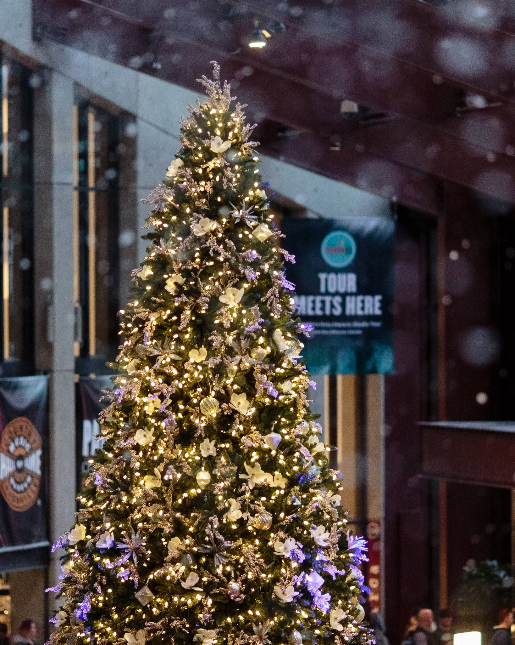 Rockefeller Pine Tree