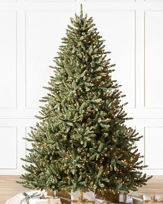 Cl Ic Blue Spruce Tree 1